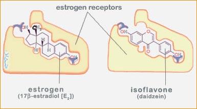 Структура фитоэстрогенов