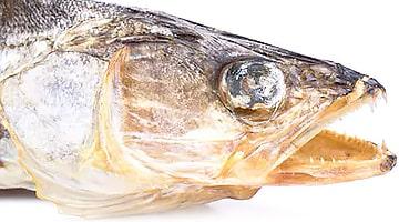 Сушеная рыба оптом